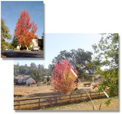 Fall In Placerville